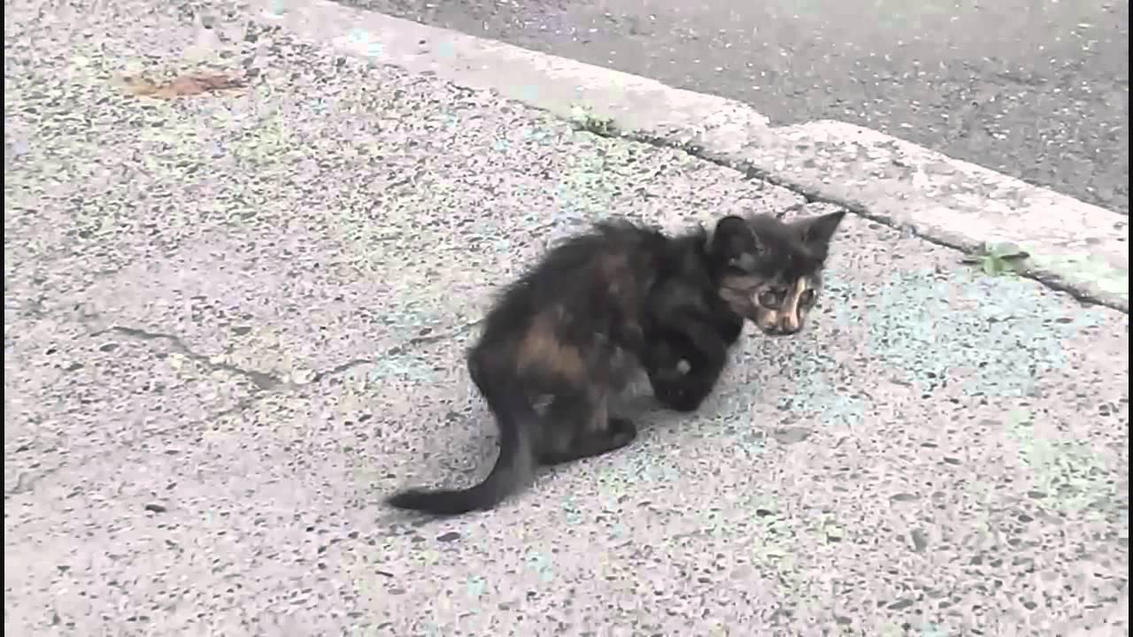 ВУфе отыскали котенка, застрявшего ввентиляционной шахте 12-этажного дома
