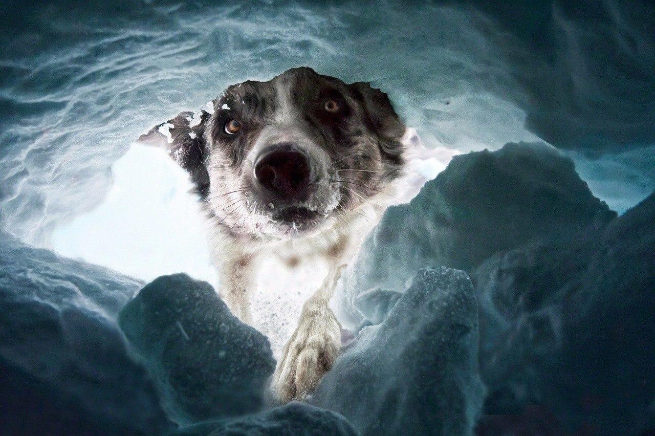 ВКрасноярске доберман спас замерзающего всугробе мужчину