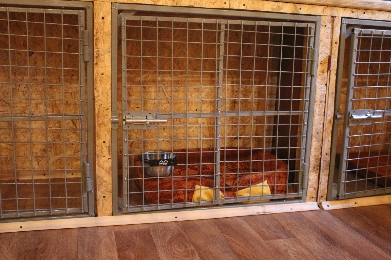 ВКрасноярске практически 3,5 тыс. фактов отлова бродячих собак «приписал» подрядчик