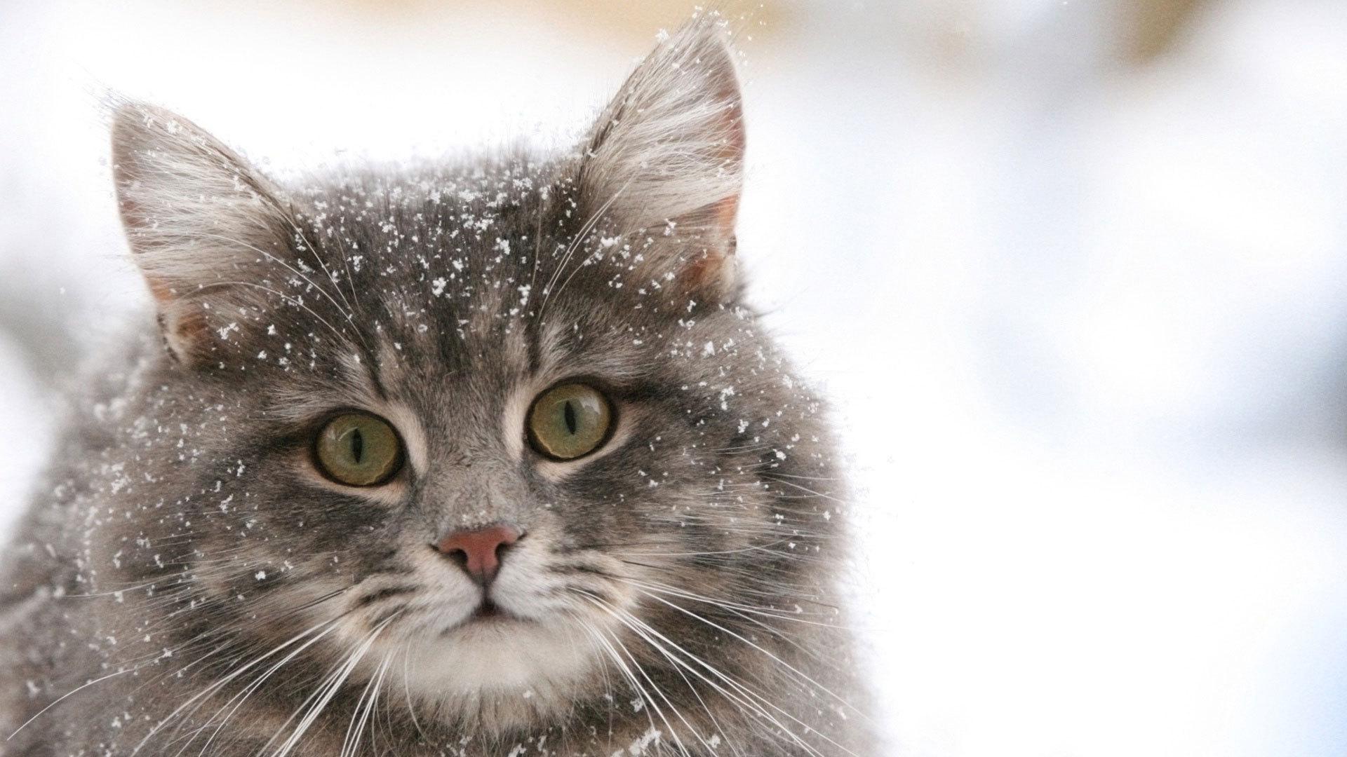 Кота, вмерзшего влед при минус 35, спасла семейная пара вЗлатоусте