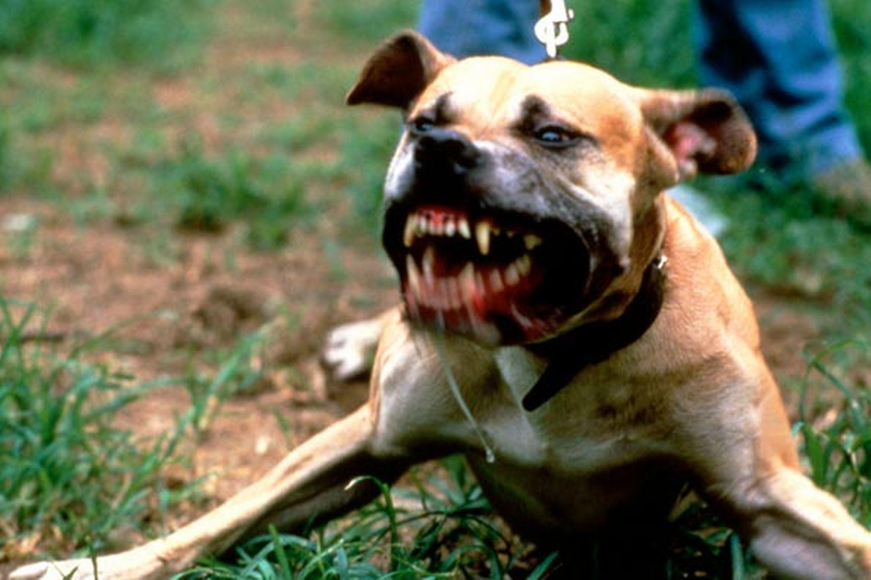 ВМиассе бойцовская собачка напала напенсионера вмагазине