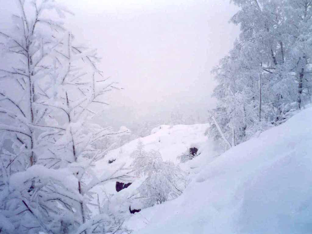 ВСвердловской области продолжают держаться аномальные морозы