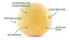 Как правильно выбрать сладкую дыню