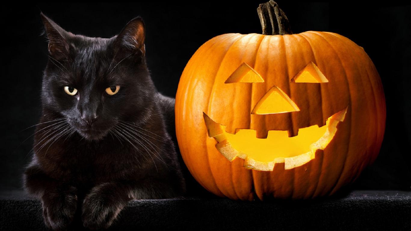 Картинки хэллоуина черных котов