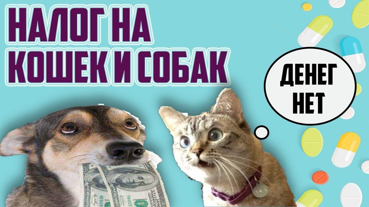 В России планирую ввести новый налог на домашних животных