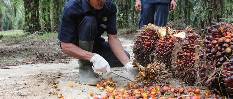 Невероятные данные социологов: Европа и США – фанаты пальмового масла!