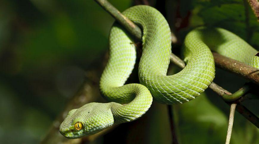 Самые опасные для туриста животные на Пхукете